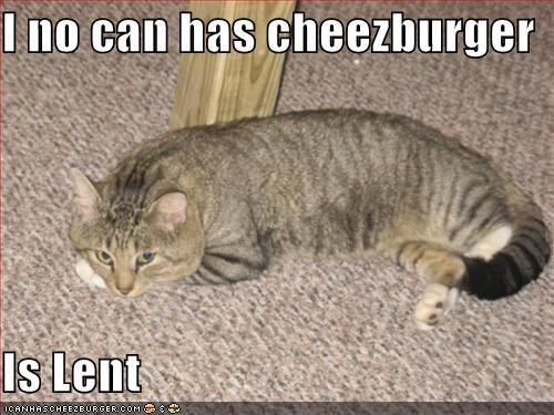 funny-pictures-cheezburger-lent-cat