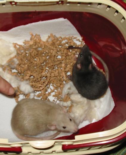 December 2003, aankomst Nozzie en Mr. Bean