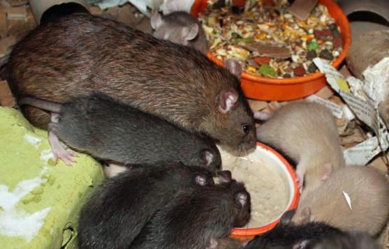 Moeder en kids aan het eten