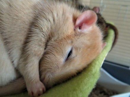 Ik lig te slapen ja.....