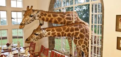 Giraf in je huis